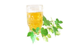 Glass of beer with a hop branch Stock Photography