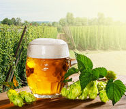 Glass of beer with hop cones Royalty Free Stock Image