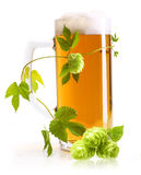 Glass of beer and hop Royalty Free Stock Photo