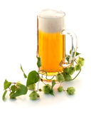 Glass of beer and hop plant Royalty Free Stock Image