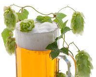 Glass of beer and hop plant Royalty Free Stock Photos