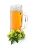 Glass of beer and hop plant Royalty Free Stock Photography
