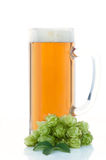 Glass of beer and hop plant Stock Photos