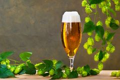 Glass of beer. With hops royalty free stock image