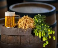 Glass of Beer with Hops and Barley Royalty Free Stock Photography