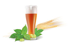 Glass of beer, hops and barley Royalty Free Stock Image