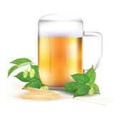Glass of beer, hops and barley -  on white background Royalty Free Stock Image
