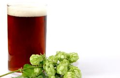 A glass beer with hops. A glass dark beer with hops in front Royalty Free Stock Image