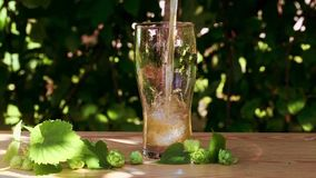 Glass of beer with hops poured, jet, foam on the wooden, sun, garden, street, gold, tasty, beautiful stock video