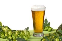 Glass of beer and hops. On the white background stock photo