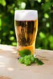 Glass of beer with hops on the wooden sun, garden Stock Photography