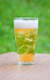 Glass of beer with ice beside  in garden Royalty Free Stock Photos