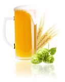 Glass of beer isolated Stock Photography