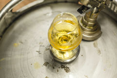 Glass of beer on a keg. Tasting glass with clear lager beer standing on a stainless steel keg at a brewery Stock Photos