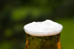 Glass Beer or Lager,in the Restaurant Royalty Free Stock Photography