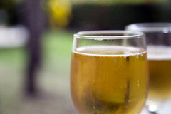 Glass of Beer in Nature. A glass of beer among trees and nature Royalty Free Stock Image