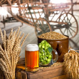 Glass of beer and raw material for beer production Royalty Free Stock Image