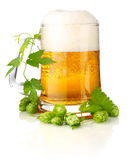 Glass beer with rich and aromatic hop Stock Photos