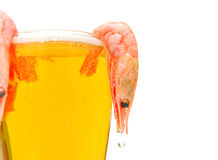 Glass of beer and shrimp on a white background Stock Images