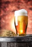 Glass of beer with wheat ears Stock Photography