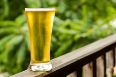 Glass beer Royalty Free Stock Photos