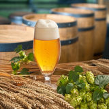 Glass of beer Royalty Free Stock Photography
