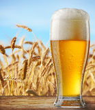 Glass of beer. On wooden table royalty free stock photo