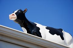 Glass Black and White Cow on Roof Stock Images