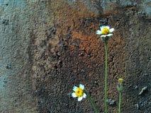 Glass blomma och vägg Arkivfoton