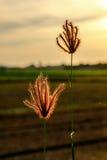 Glass blommor tillfogar tappningeffekt Arkivfoto