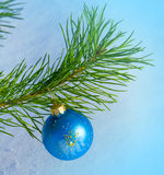 Glass blue ball on christmas tree Royalty Free Stock Photography