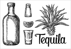 Glass, botlle of tequila, cactus, salt, lime. Hand drawn sketch set of alcoholic cocktails. Vector engraving illustration Stock Image