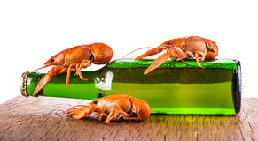 Glass bottle of beer and crayfish Stock Images