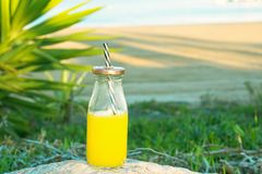 Glass Bottle with Freshly Pressed Tropical Fruits Juice Straw Standing on Rock at Beach. Green Palm Tree Leaves Succulents. In Background. Blue Sky Golden Stock Photos