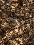 Glass bottle, garbage thrown into the forest`s leaf-covered bottom Royalty Free Stock Photos