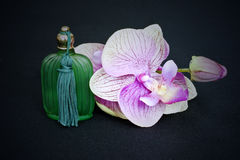 Glass bottle and orchid Royalty Free Stock Image