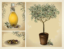 Glass bottle of premium virgin olive oil and some olives with leaves. Illustration olive tree Royalty Free Stock Photos