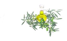 Glass bottle wtih extra virgin olive oil and olive branches. Olive tree brunch with olives isolated on white background. Natural and bio product. Greek olive Stock Image