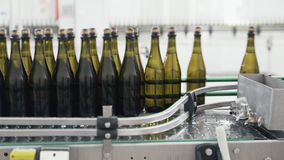 Glass bottles on the automatic conveyor line at the champagne or wine factory. Plant for bottling alcoholic beverages. Glass bottles on the automatic conveyor stock video