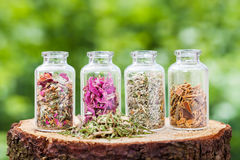 Glass bottles with healing herbs on wooden stump. On green background, herbal medicine Royalty Free Stock Photo