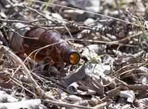 Glass bottles in nature. trash. In the park in nature Royalty Free Stock Image