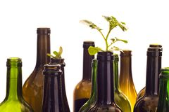 Glass bottles with plant Royalty Free Stock Photo