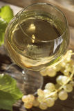 Glass of Bourgogne white wine Royalty Free Stock Photos