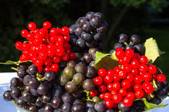 Glass bowl with a blue grapes Isabella and viburnum berries Stock Photography