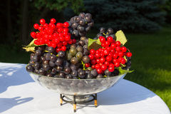 Glass bowl with a blue grapes Isabella and viburnum berries Royalty Free Stock Image