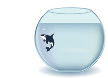 Glass bowl orca. Orcinus orca, Killer whale in an gigantic glass bowl Stock Photo