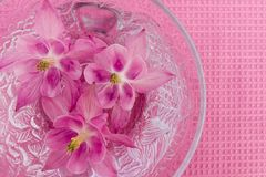 Table decoration with flowers - close up royalty free stock photography