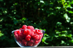 Glass bowl with raspberries Stock Image