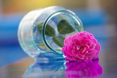 Glass box pink rose water. Day light stock photography