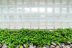 Glass box wall and green plant Stock Image